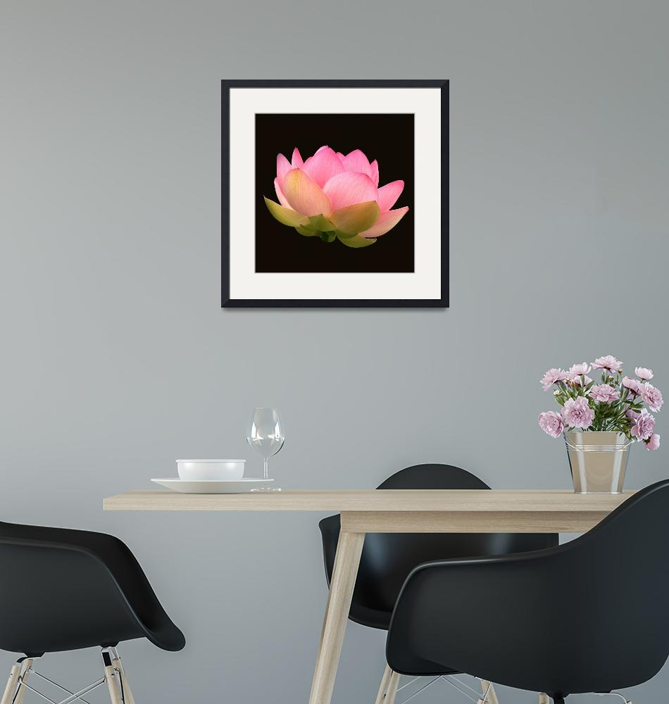 """""""Glowing Lotus Blossom""""  (2012) by LightHeart"""