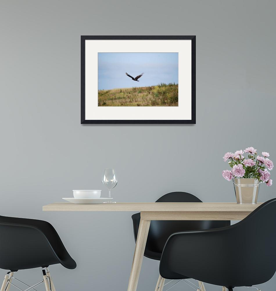 """""""TURKEY VULTURE""""  (2010) by seewater"""