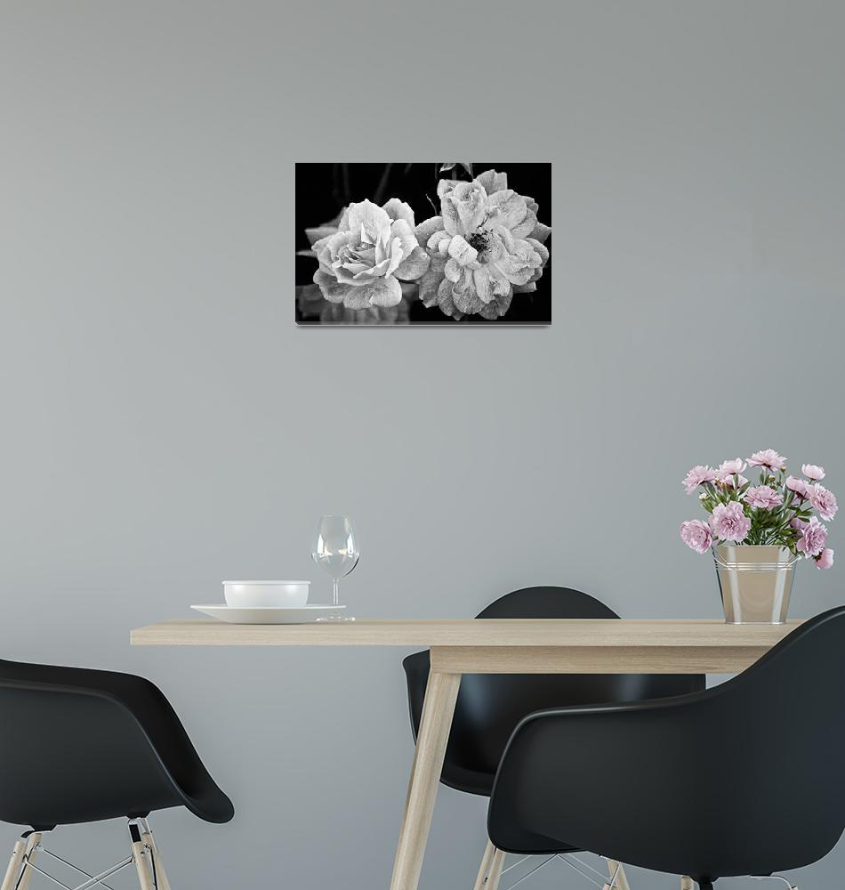 """""""Roses in Black and White""""  (2012) by BrianKerls"""