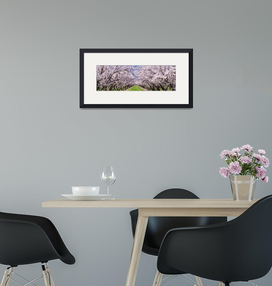 """Almond Tree Orchard nr Winters CA"" by Panoramic_Images"