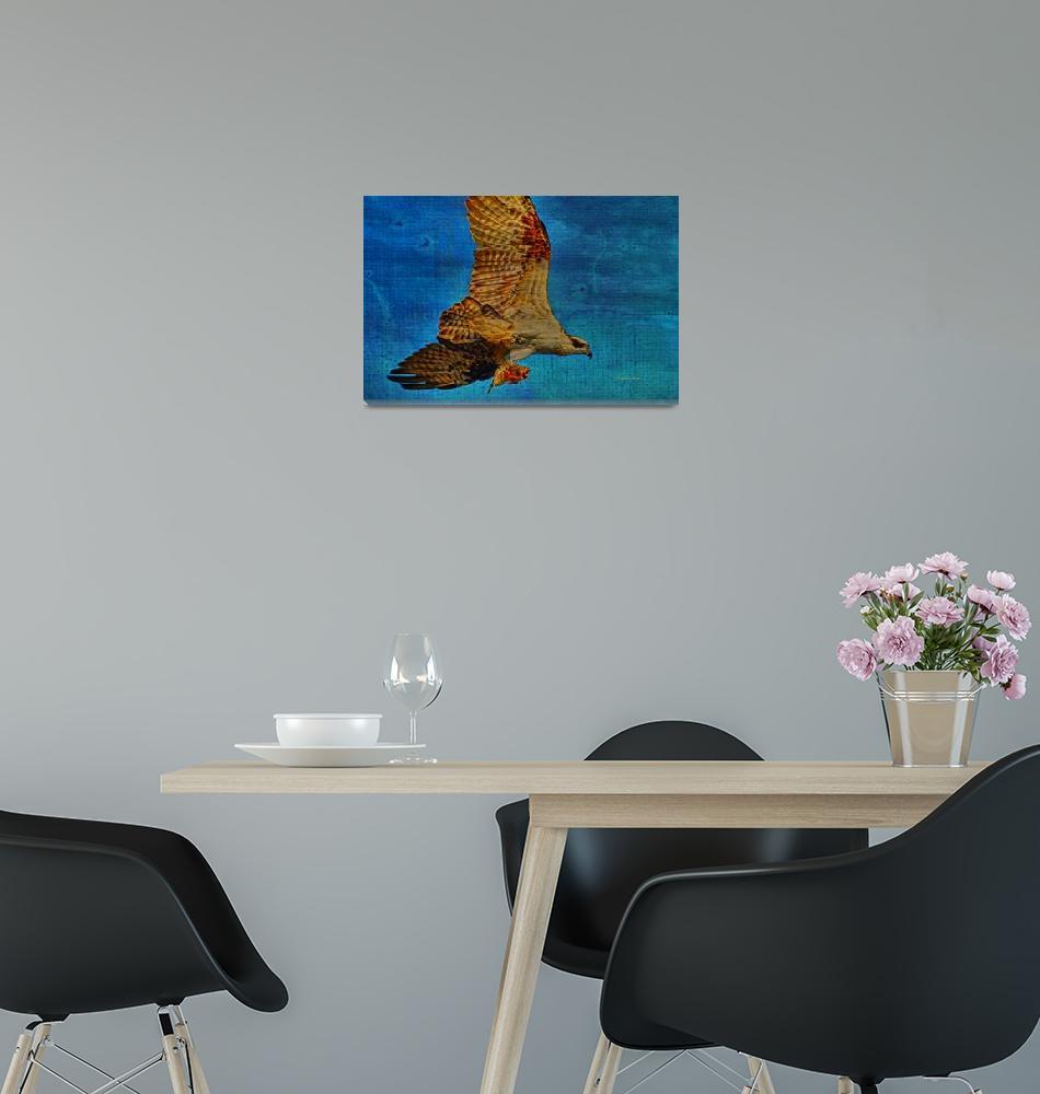 """""""Osprey Fish Eagle""""  (2015) by DBenoit"""