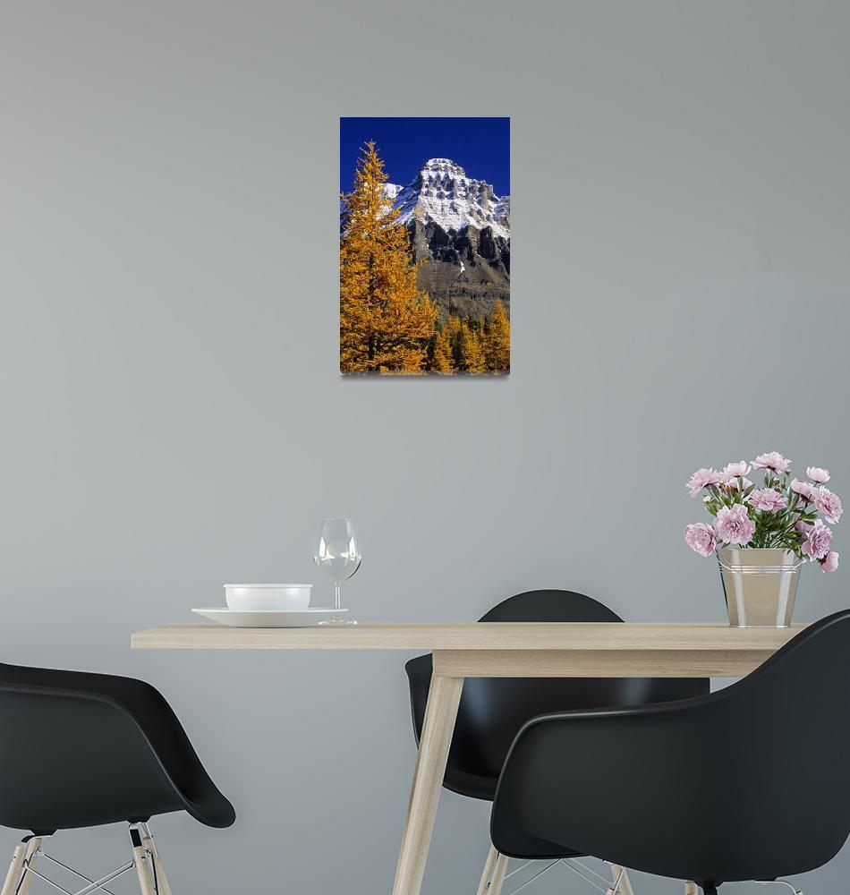 """Alpine Larch Trees, Mount Huber, British Columbia,""  by DesignPics"