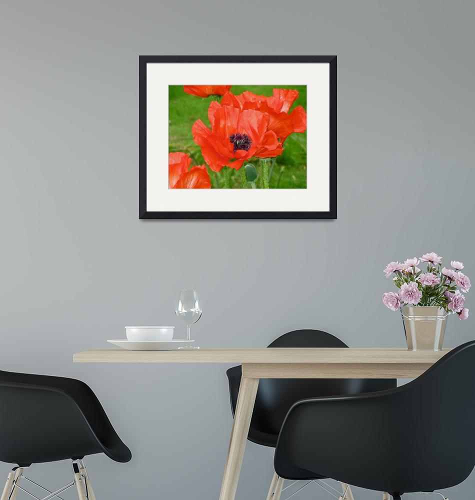 """Giverny Red Poppy""  by MaryLorArt"