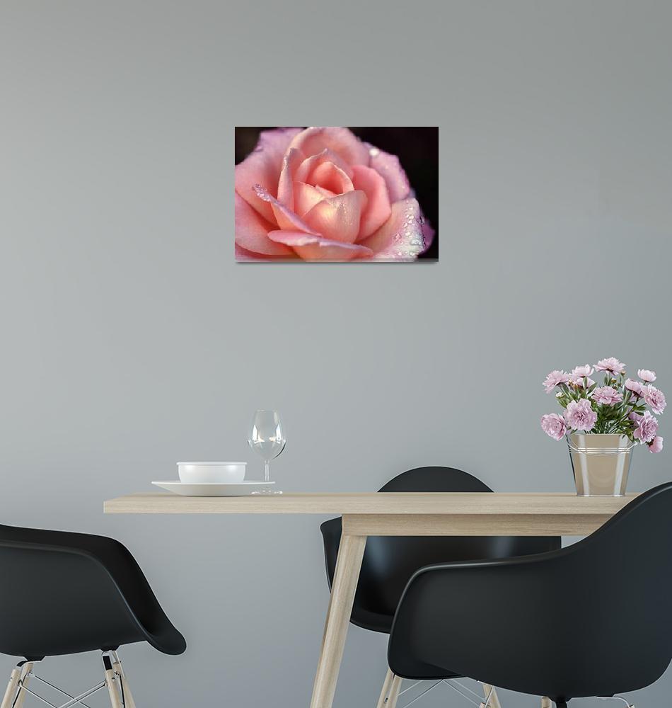 """""""Hybrid Tea Rose"""