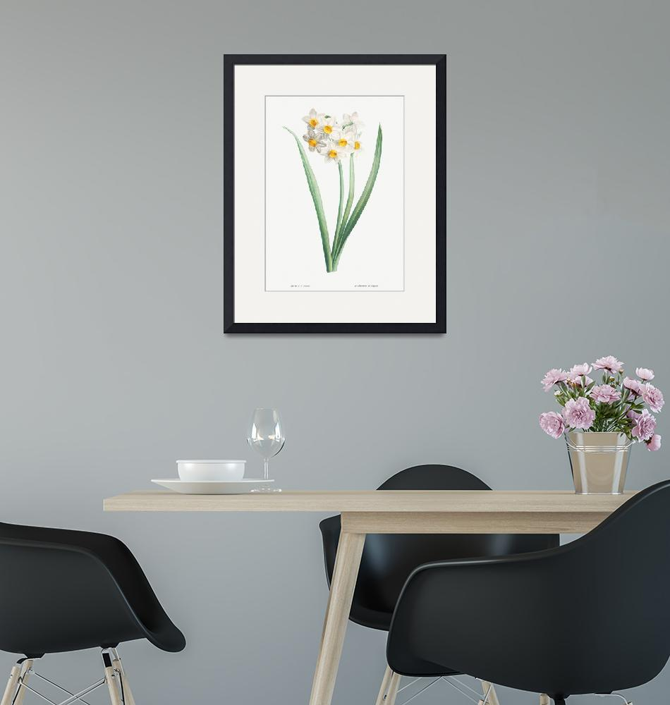 """Narcissus Vintage Botanical""  by FineArtClassics"