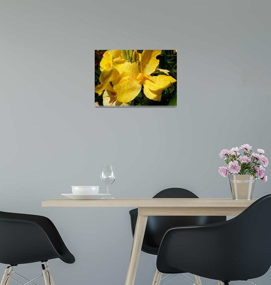 """Yellow Canna Lily""  (2012) by ShawnaRowe"