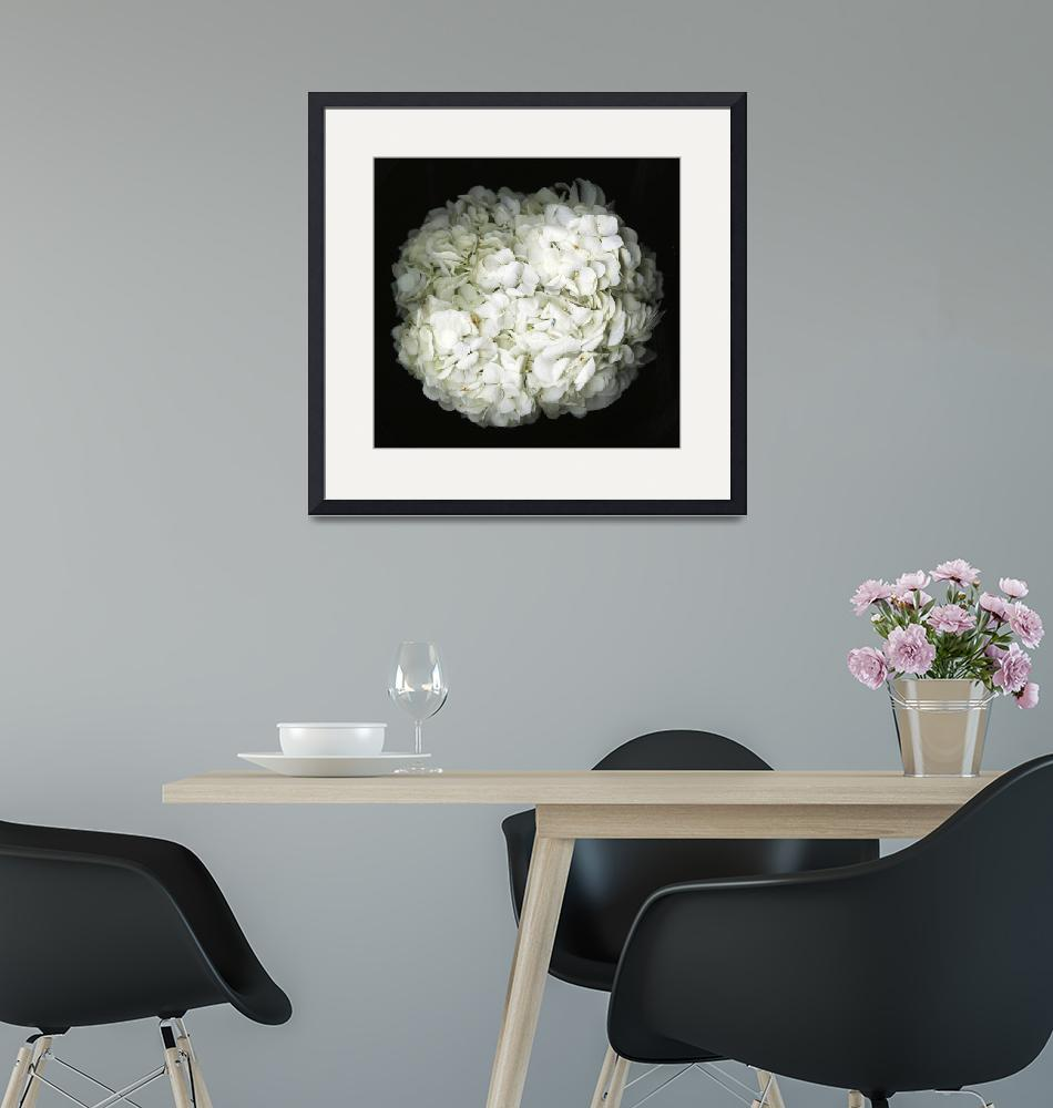 """""""Hydrangea- Black and white photography""""  (2017) by modernhouseart"""