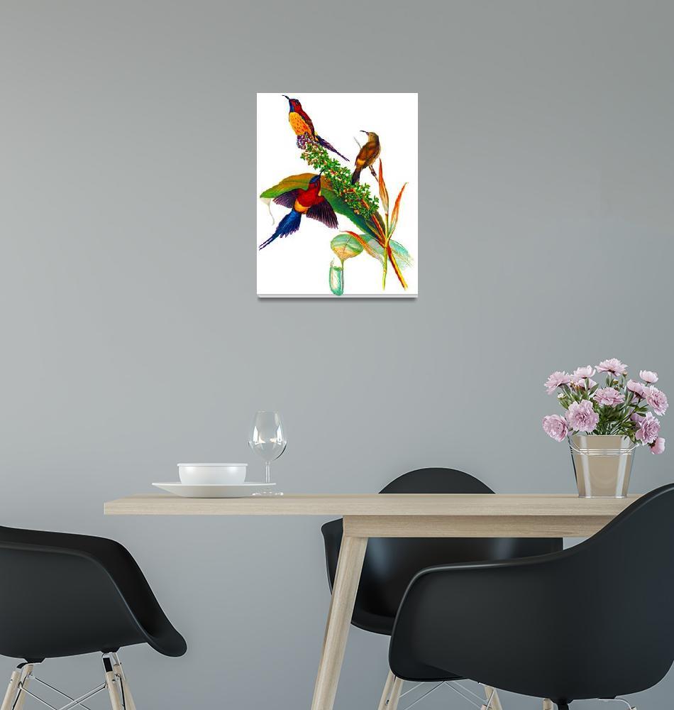 """""""Goulds Sunbird (Aethopyga gouldiae),""""  (2009) by markkumurto"""