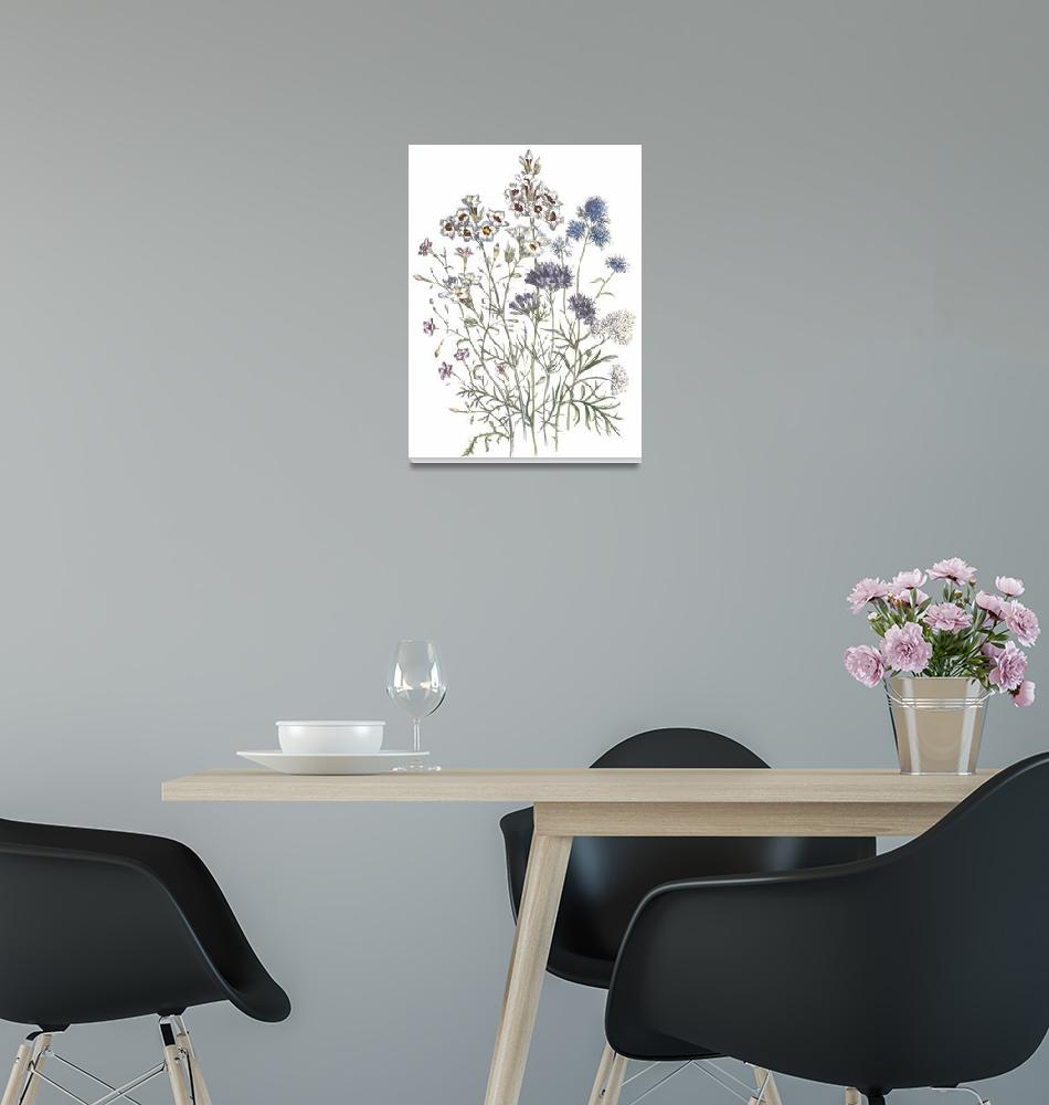 """Gilia Flowers by Jane Webb Loudon""  by ArtLoversOnline"