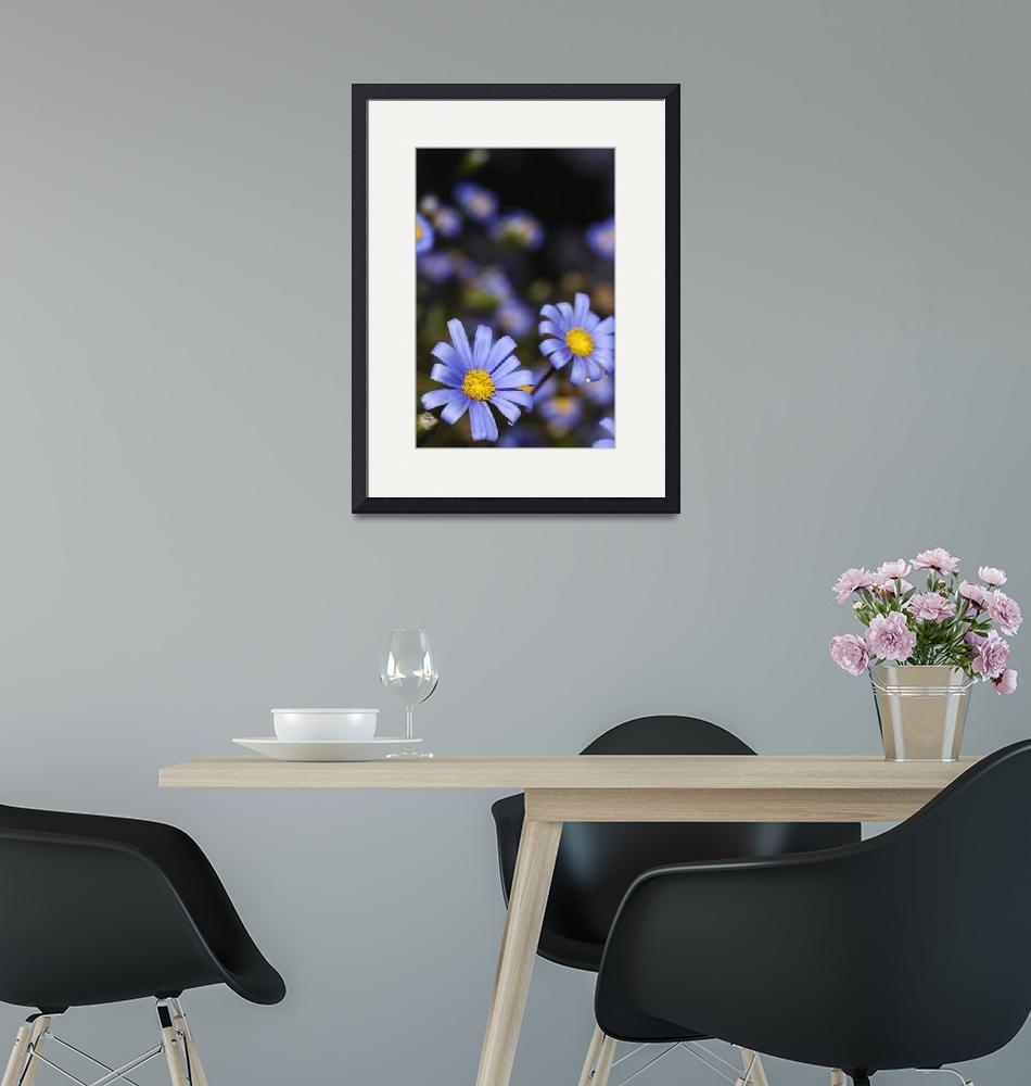 """Two Blue Marguerite Daisies, Vertical _0977""  (2005) by AmbientCreations"