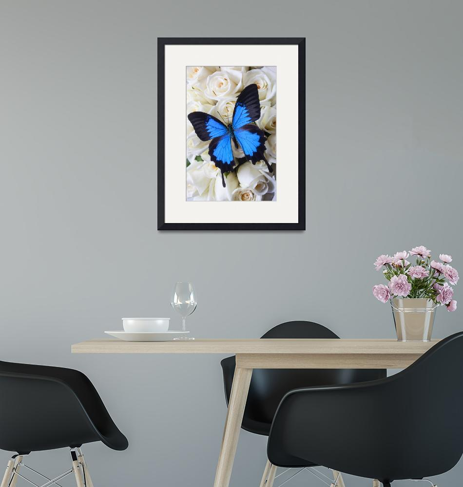 """Blue butterfly on white roses""  (2012) by photogarry"