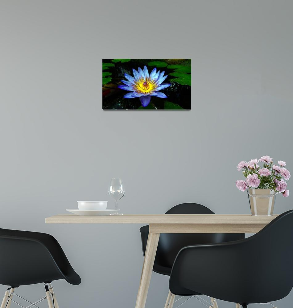 """""""Water Lilly Two""""  (2009) by gopnw"""