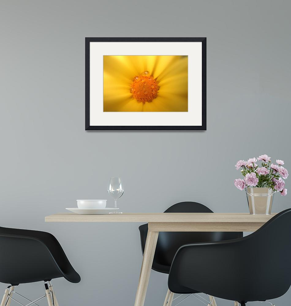 """""""Soft and yellow""""  by Micky"""