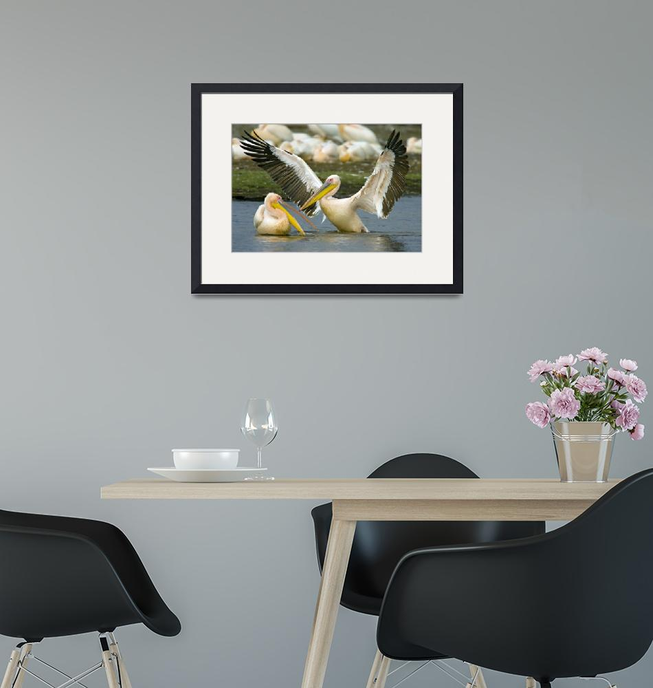 """""""Two Great white pelicans wading in a lake""""  by Panoramic_Images"""