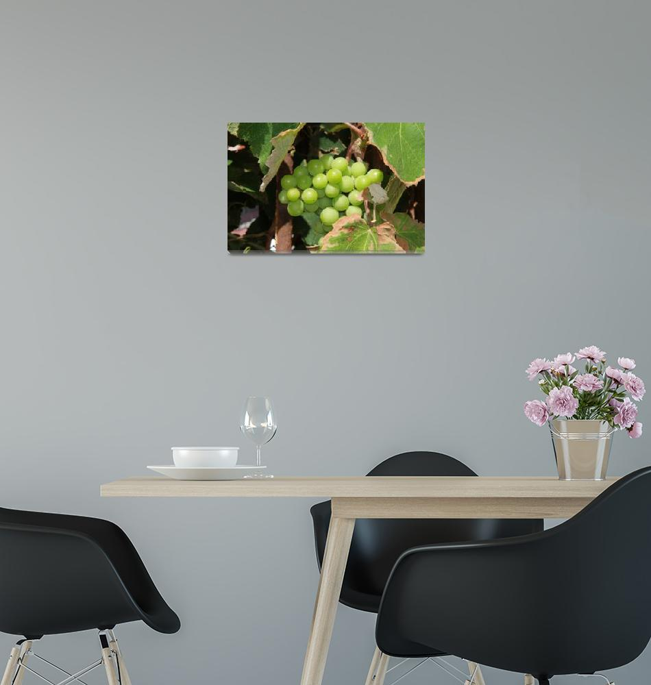 """""""Grapes""""  (2010) by easyfigure"""