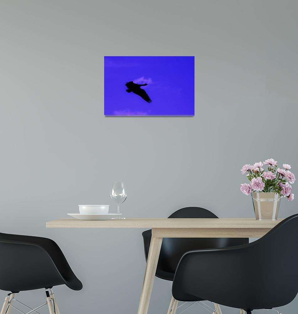 """""""Lone Canadain Goose""""  (2010) by ART4YOUR2EYES"""