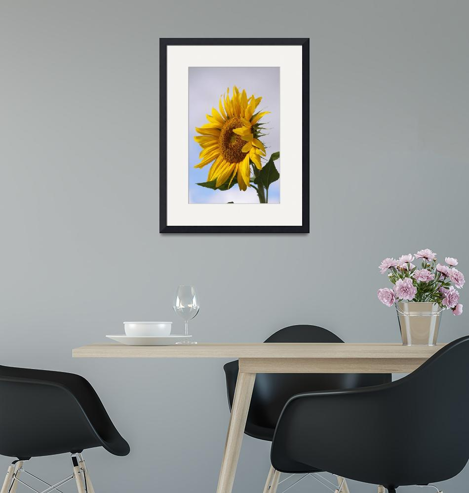 """Sunflower 2""  (2010) by CarrieAnderson"