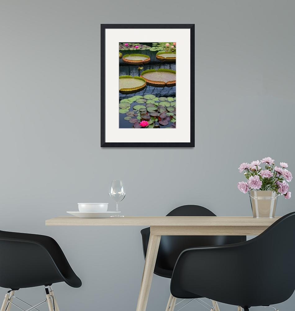 """""""Water Lilies And Platters 2""""  (2011) by LightHeart"""