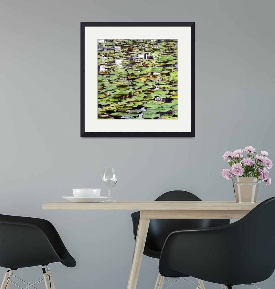 """""""Lily Pads Cypress Swamp Photo by Ginette"""" (2010) by GinetteCallaway"""