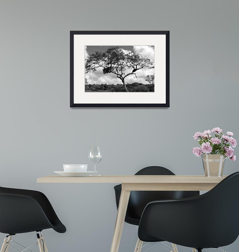 """""""Lone Tree""""  (2013) by paulschlindweinphotos"""