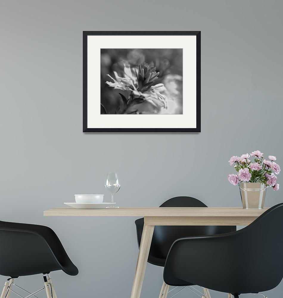 """""""Bloom in Black and White""""  (2012) by William63"""