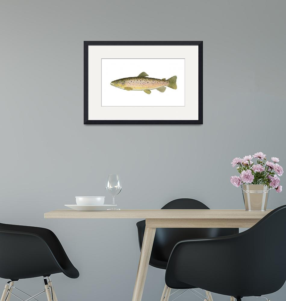 """""""Illustration of a brown trout""""  by stocktrekimages"""