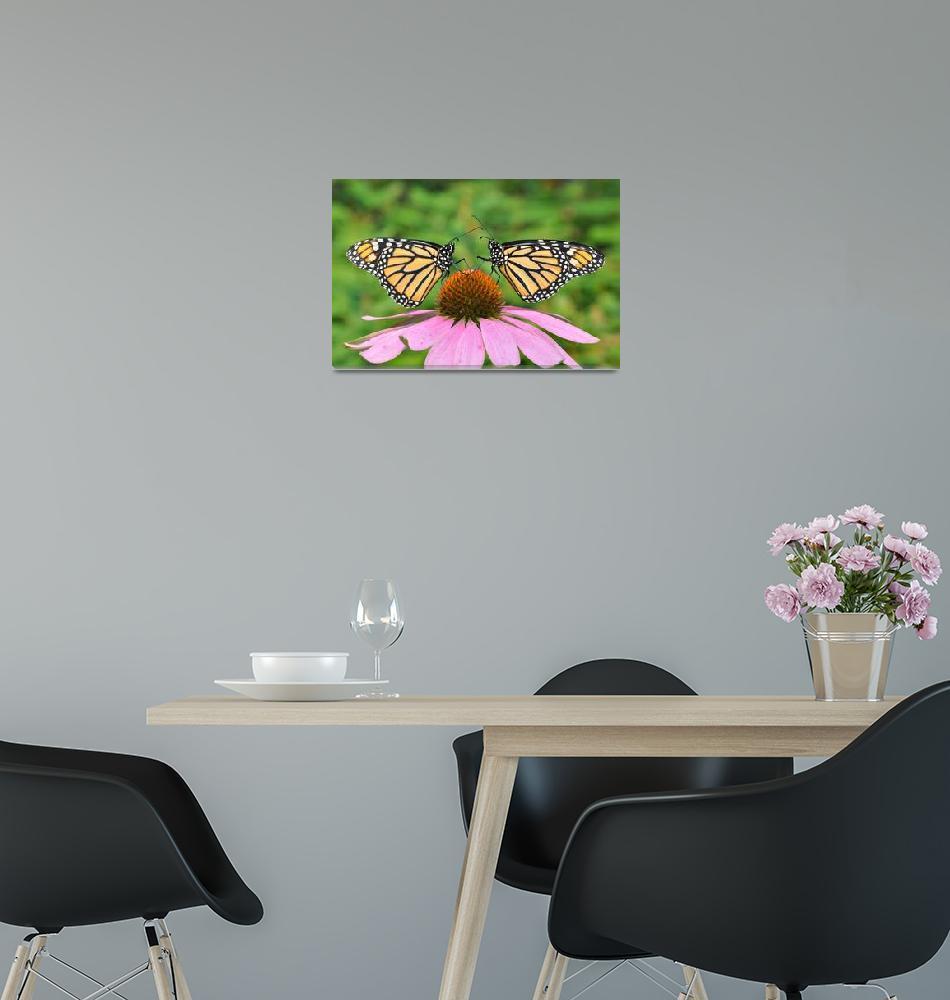 """""""Monarch Butterfly Best Friends""""  (2009) by evansonart"""