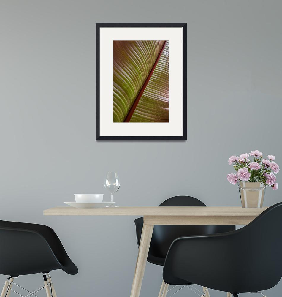 """Large Tropical Leaf""  (2008) by TonyDoddPhotography"