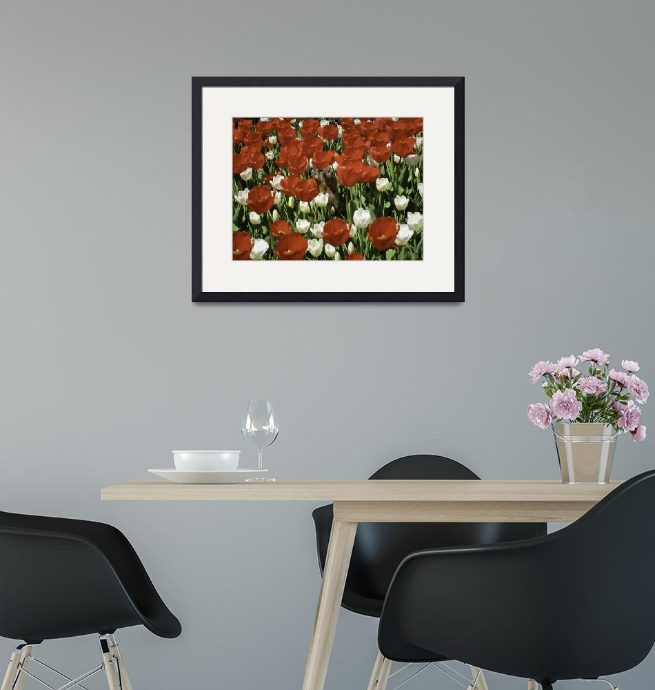 """""""Groundhog Standing in Red & White Tulip Flower Bed""""  by Chantal"""