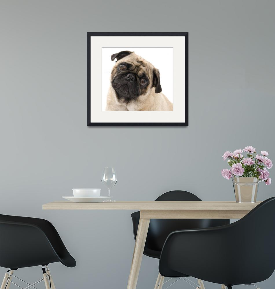 """""""Pug with Tilted Head.""""  (2007) by dosecreative"""