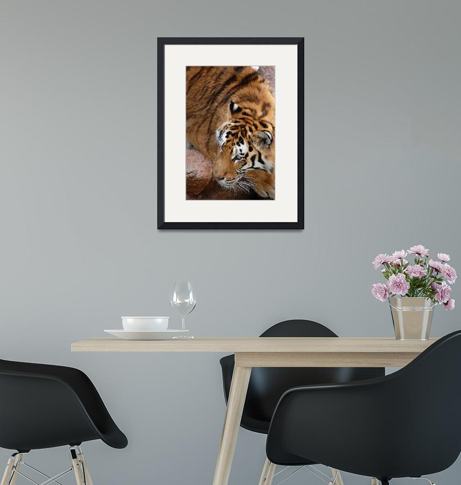 """""""Bengal Tiger""""  (2018) by crazyabouthercats"""