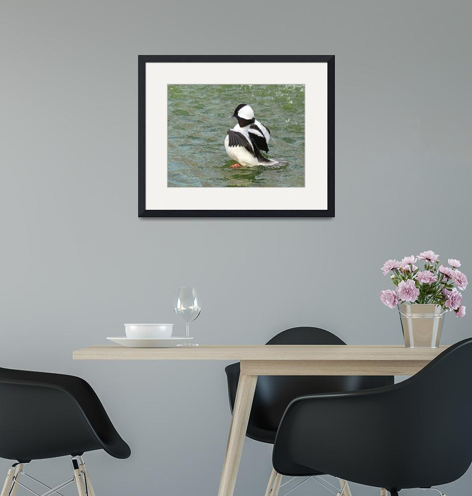 """Bufflehead""  (2011) by laowti"