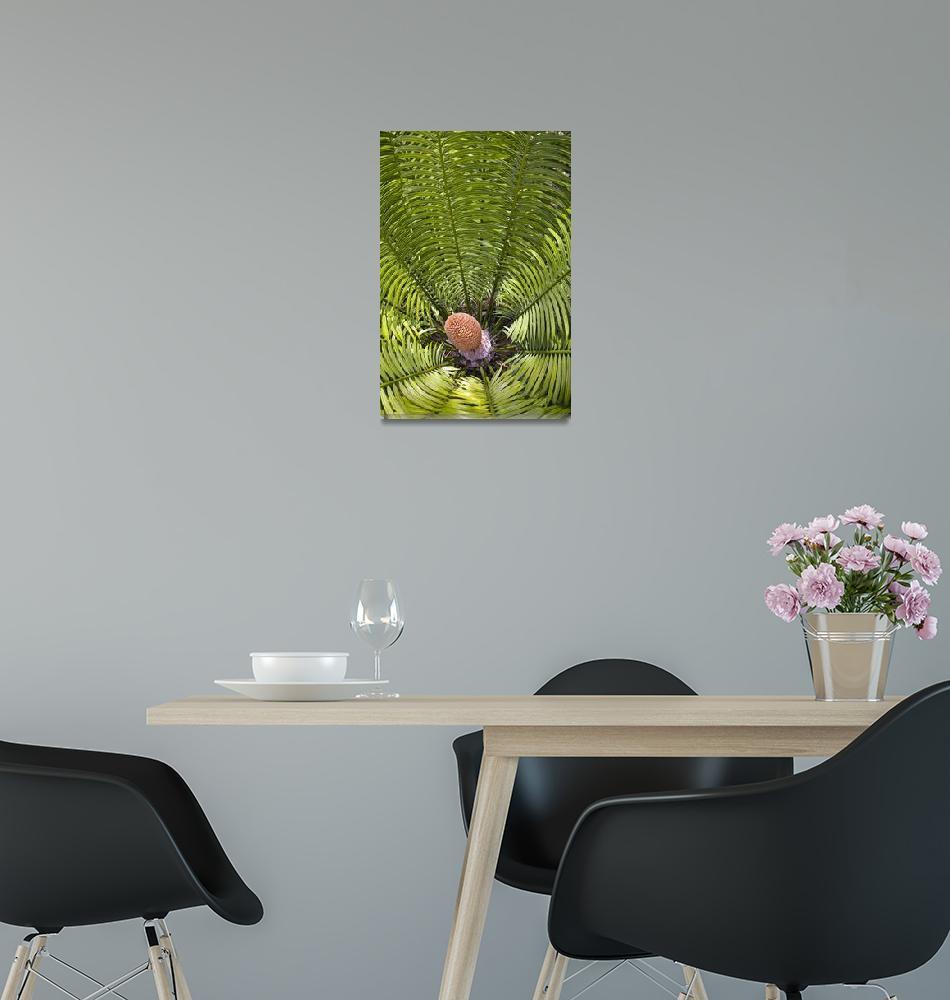 """Fiji, Denarau Island, Palm Related Plant Close-Up""  by DesignPics"