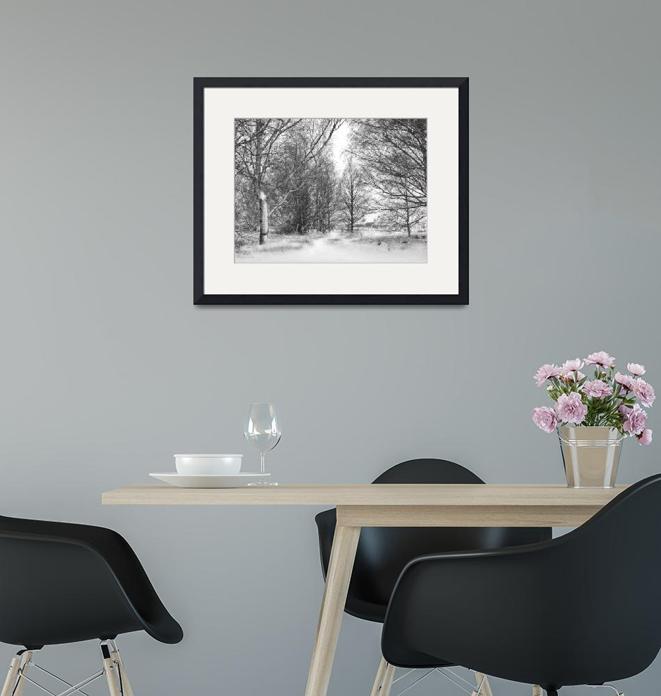 """""""Trees in Snow Storm - B&W""""  (2010) by ChrisWhitePhotography"""