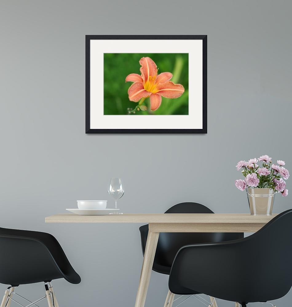"""""""pink lily""""  by AlexPo"""