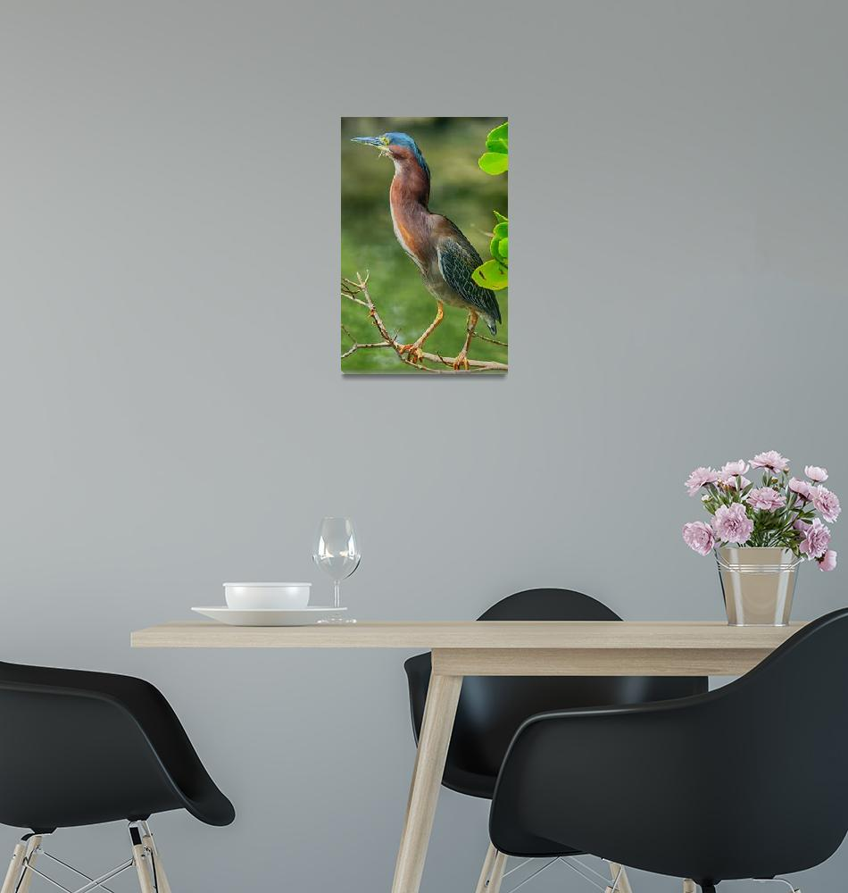 """Green Heron Pose""  (2017) by DBenoit"