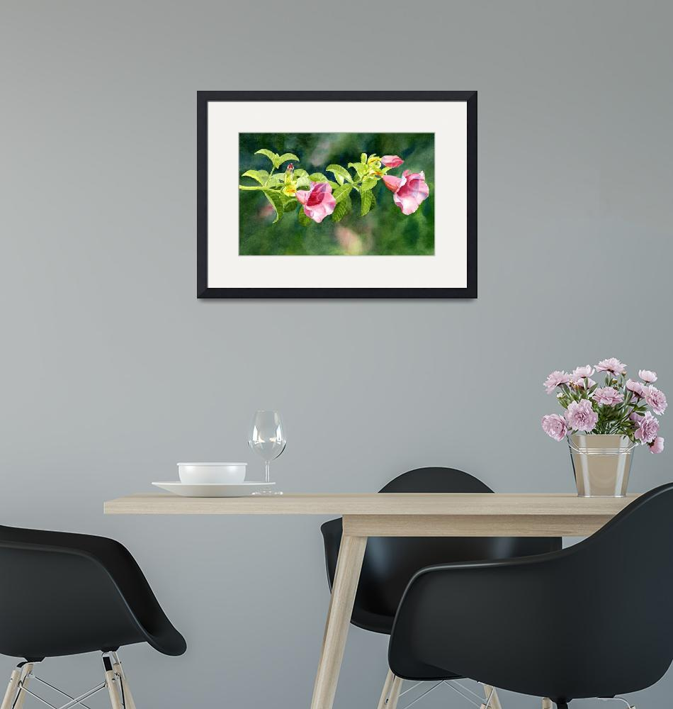 """Pink Allamanda Blossoms with Background""  (2011) by Pacific-NW-Watercolors"