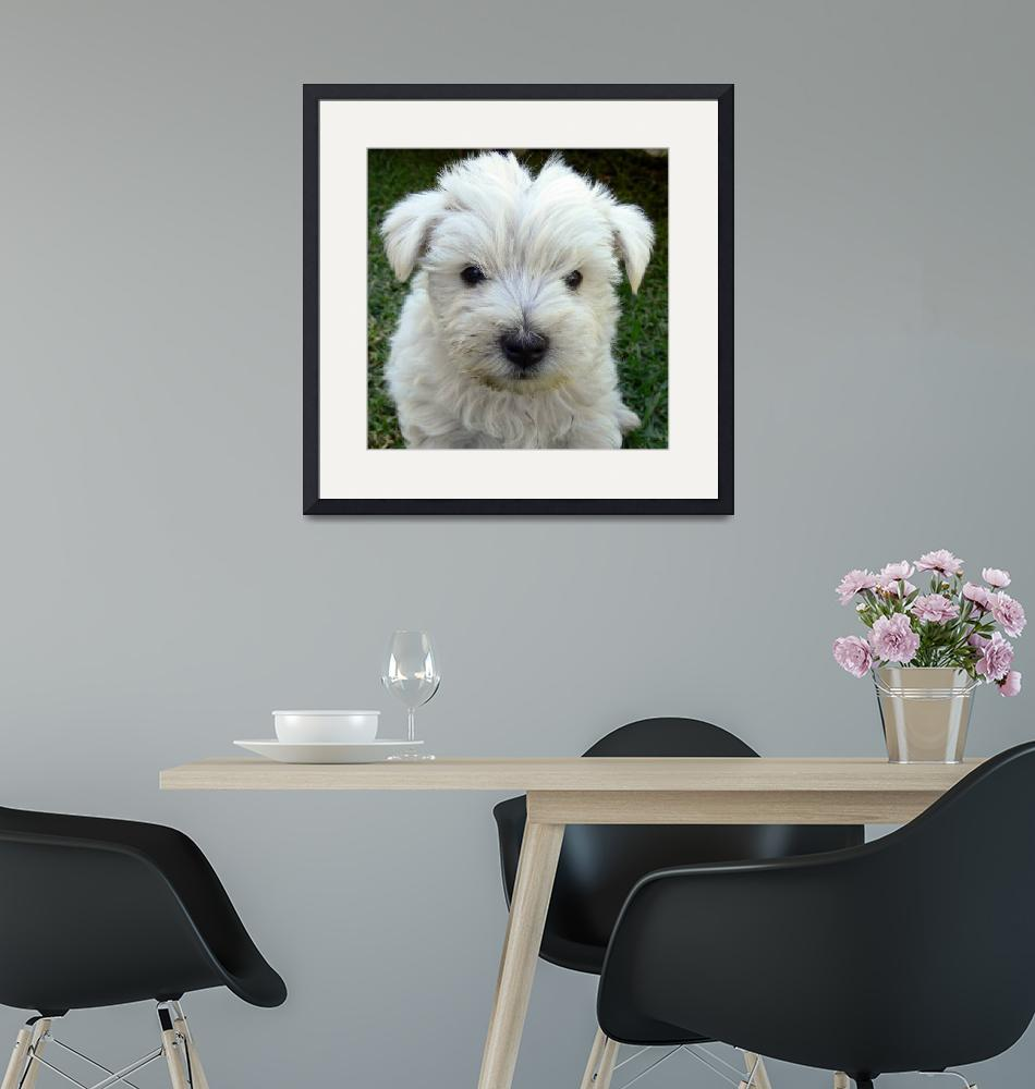 """West Highland White Terrier Puppy""  (2008) by Westie"