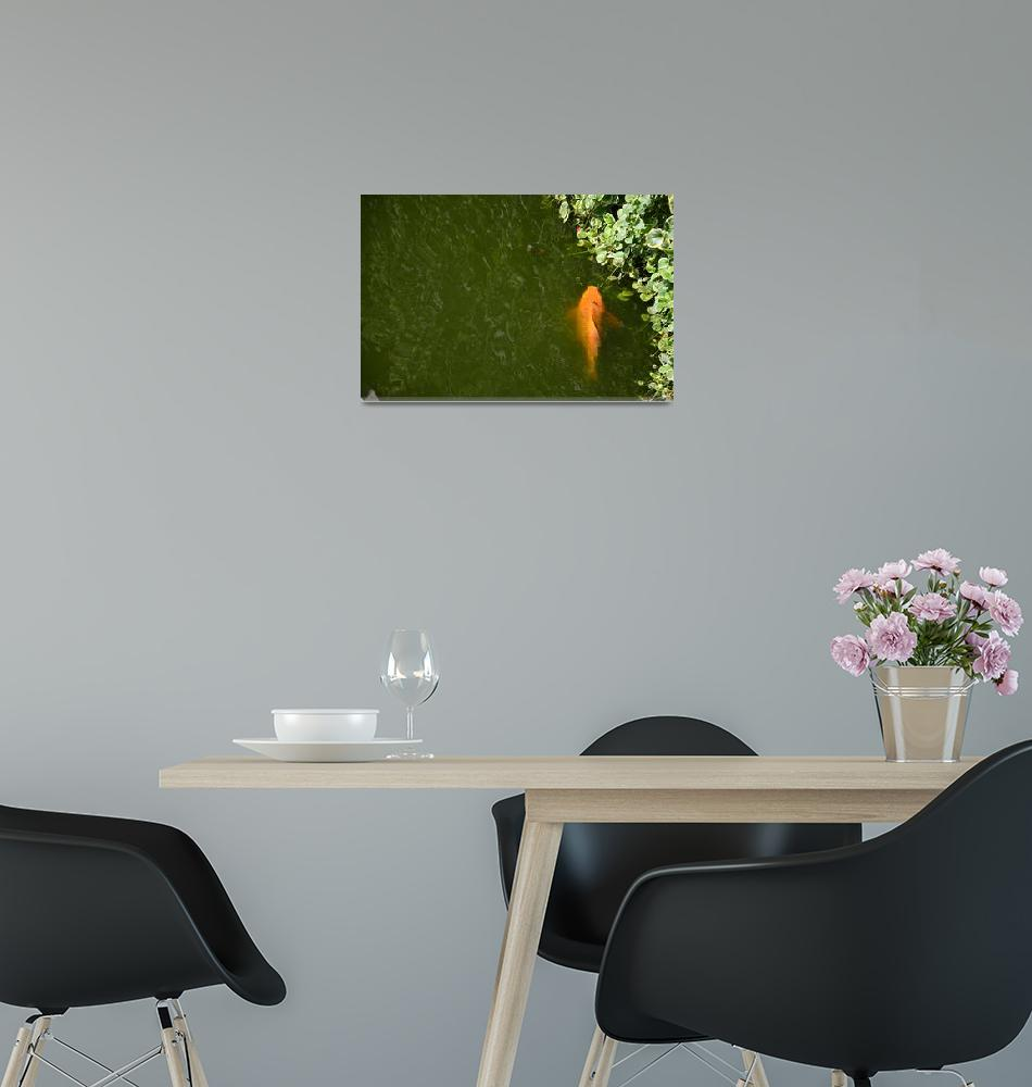 """""""The view of the fish in the pond""""  (2014) by danieltoryfter"""
