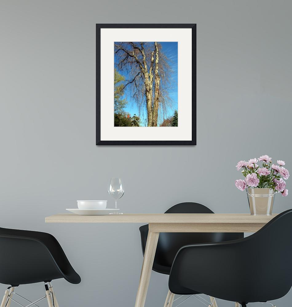 """""""Tall Tree""""  (2006) by Peter-A-Kopher"""
