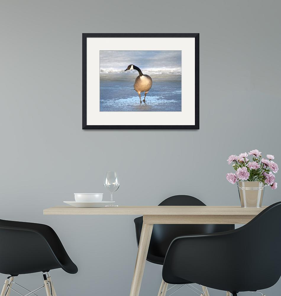 """""""A lone Canada goose in spring""""  (2008) by lovecanadageese"""