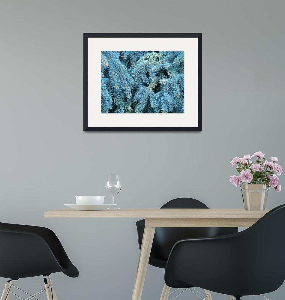 """""""Blue Spruce Conifer Tree branches Art prints""""  (2014) by BasleeTroutman"""