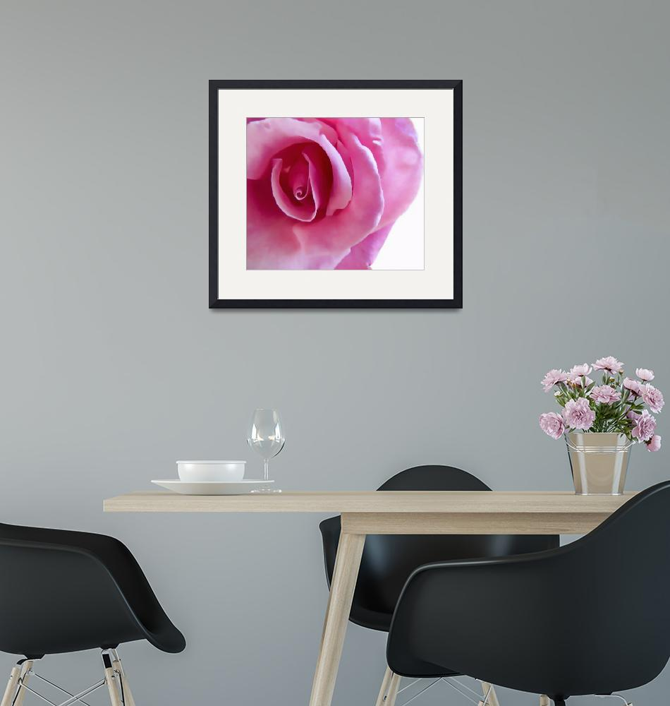 """""""Pink Rose""""  by OPster"""