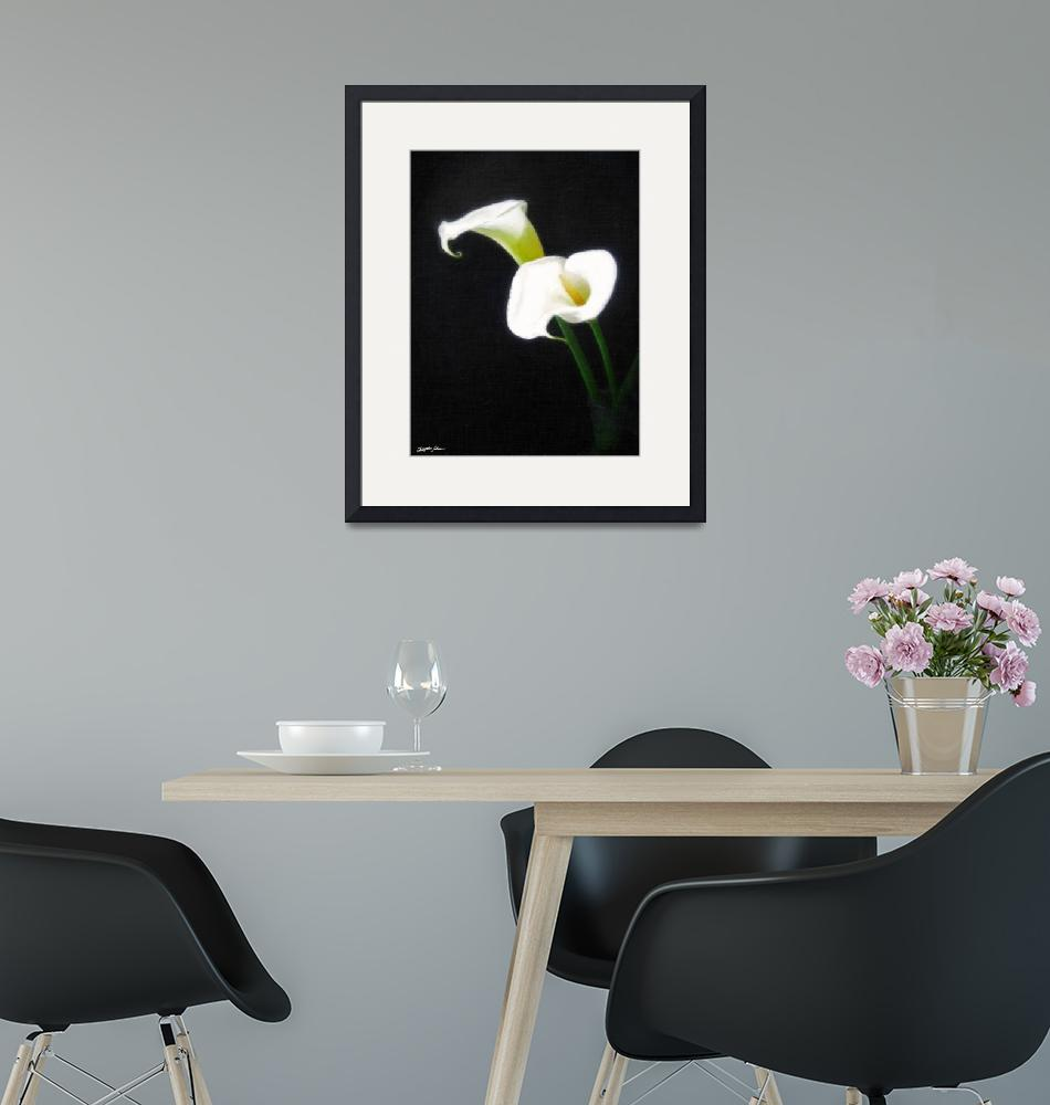 """Elegant Calla Lily Flowers 1 Painterly""  (2011) by ChristopherInMexico"