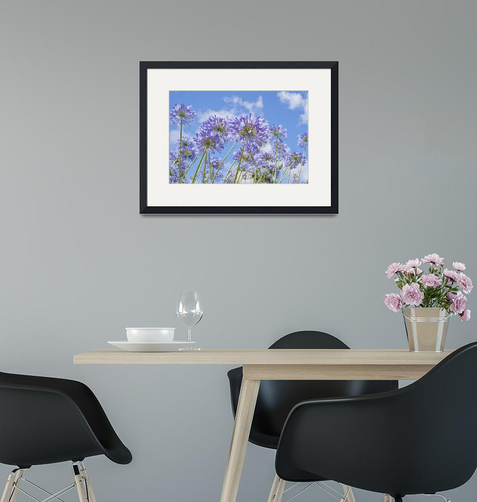 """""""African Lily (Agapanthus)""""  (2011) by Rajeshbac"""