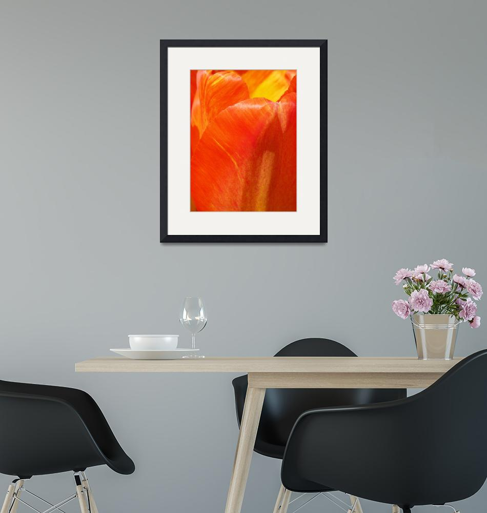 """""""Colors of the Tulip""""  (2015) by vpicks"""