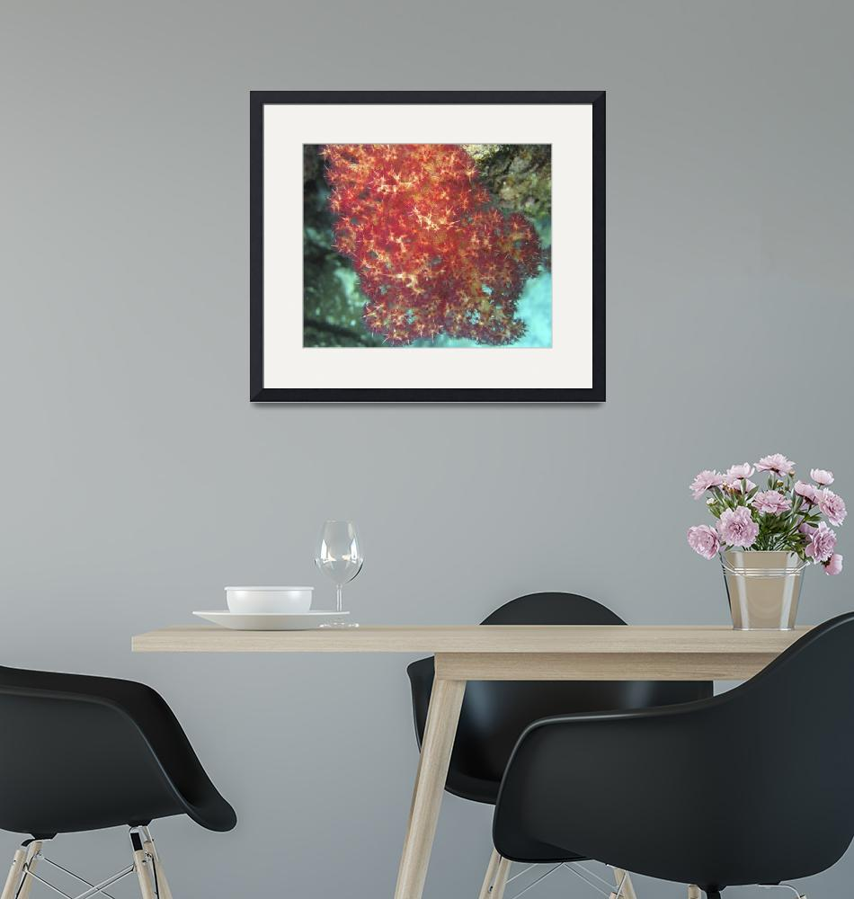 """""""Red Soft Coral""""  by Mac"""