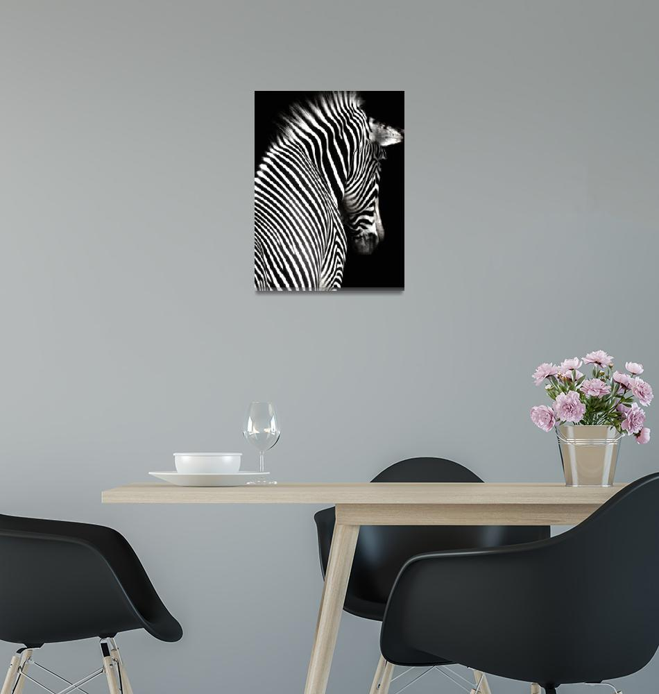 """""""Black and White Zebra with Black Background""""  (2009) by walbyent"""