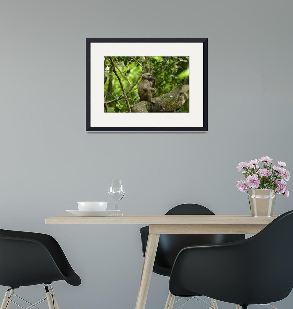 """""""Baboon in Tanzania Jungle""""  by Teager"""