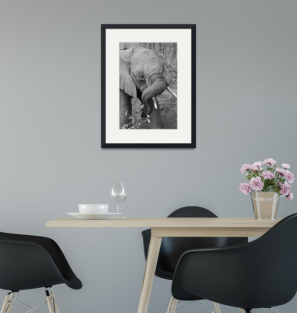"""""""Young Elephant""""  by DaniSweet"""